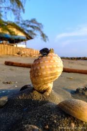Andaman Coast-32