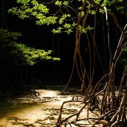 Andaman Coast-10