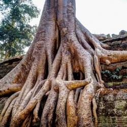 Angkor Wat-66