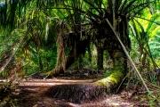 Nature at its best at Nicoya Peninsular