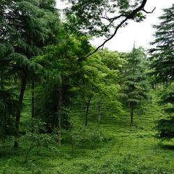 Himachal Pradesh-26