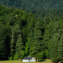 Himachal Pradesh-46