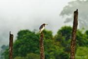 Khao Sok Nationalpark-39