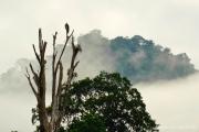 Khao Sok Nationalpark-41