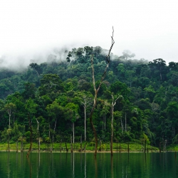 Khao Sok Nationalpark-33