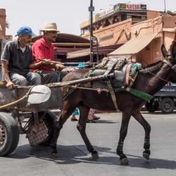 Morocco-31