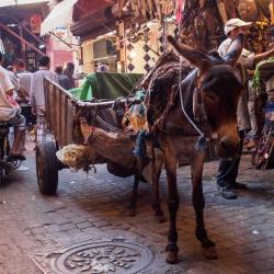 Morocco-86