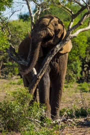South Africa-27
