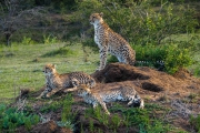 South Africa-32