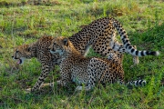 South Africa-34