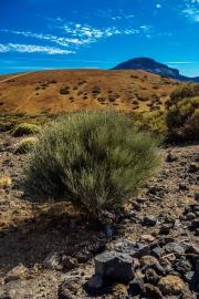 Tenerife-43