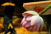 Thai Temple-55
